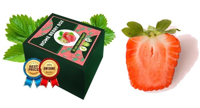 HOME BERRY BOX fragole fatte in casa: raccolto incredibile e fragole gustose GIÀ DOPO UN MESE!